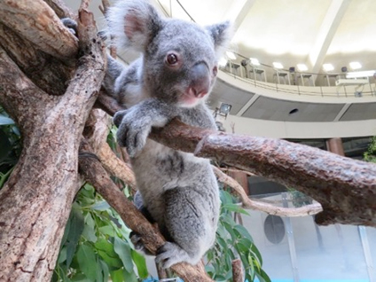 「多摩動物公園」の画像検索結果