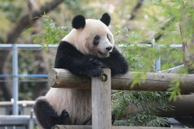 恩賜上野動物園シャンシャンの返還期限の延期について|東京都